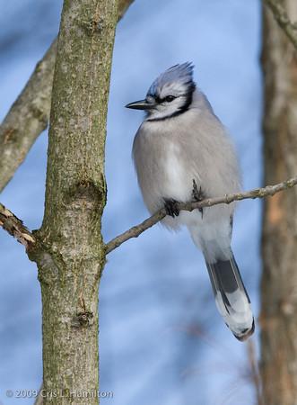 Bird Taxonomy