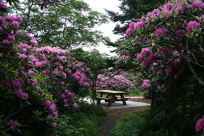 Rhododendron Trail  (2011 Only)