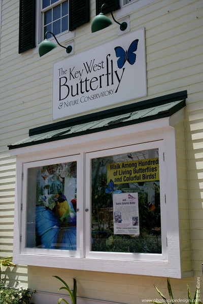 The Butterfly and Nature Conservatory (Key West)