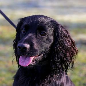 Dog Portrait Shoot - Conway