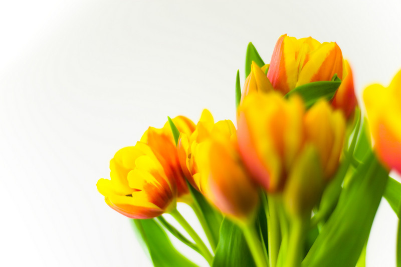 Tulip Light Box_16.jpg