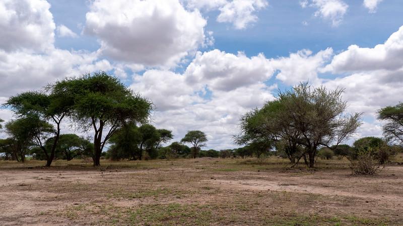 Tanzania-Tarangire-National-Park-Safari-Baboon-04.jpg