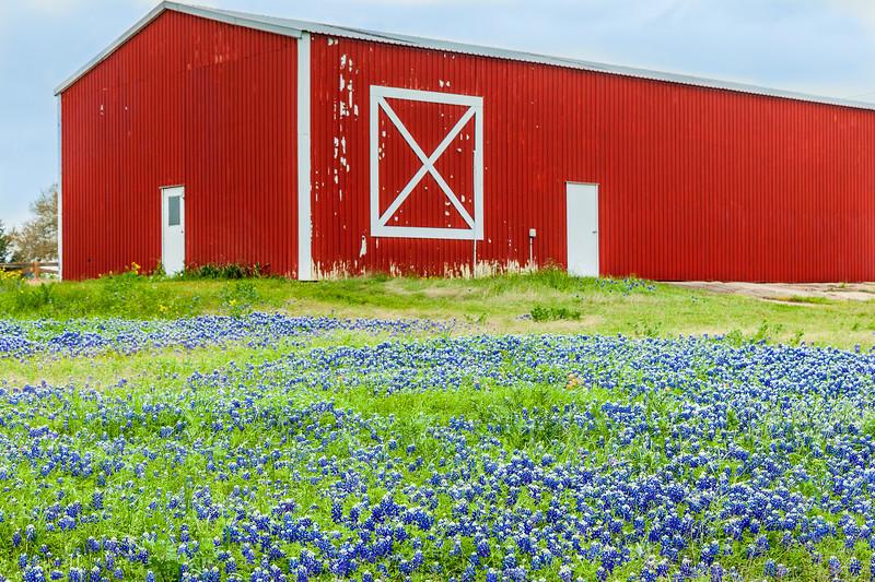 2015_4_3 Texas Wildflowers-7530-2.jpg