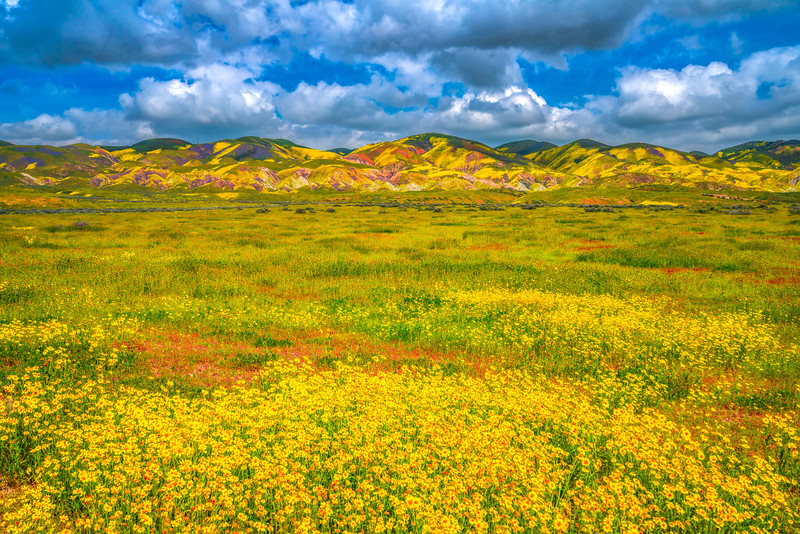 Carrizo Plain National Monument Wildflowers Superbloom Spring Symphony #2!  Elliot McGucken Fine Art Landscape Nature Photography Prints & Luxury Wall Art