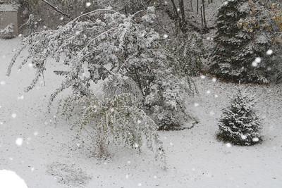 October 29th 2011 Snow Storm