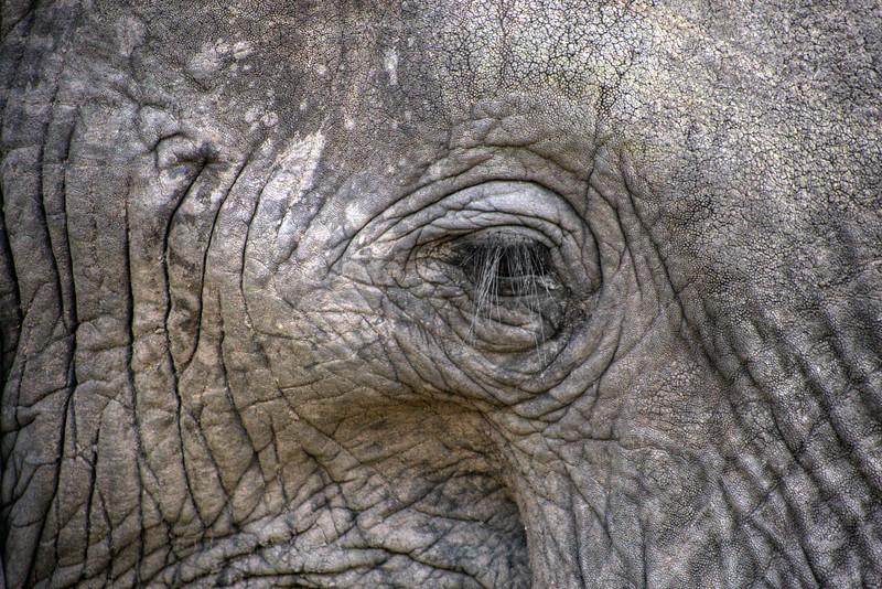 Mark-Fletcher-Elephant Eye.jpg