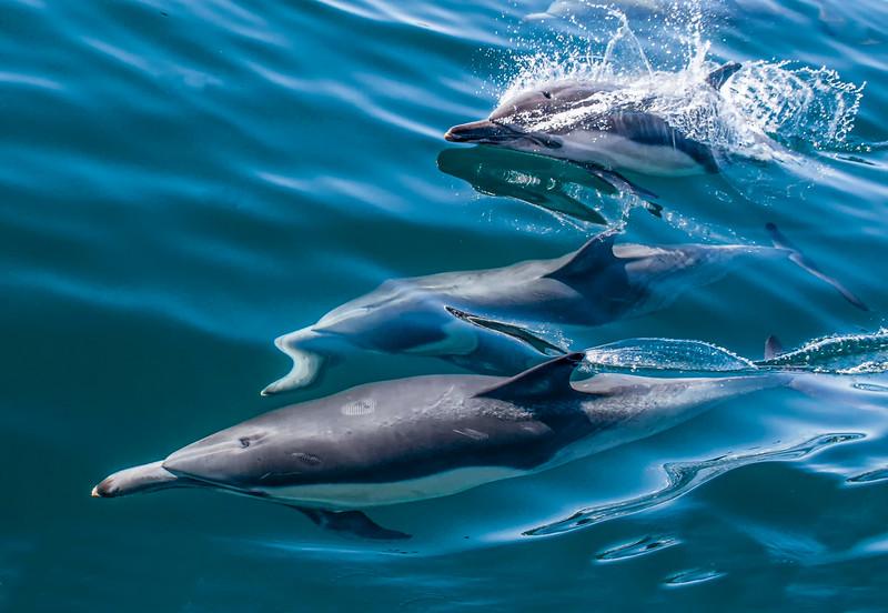 Dolphin-24.jpg