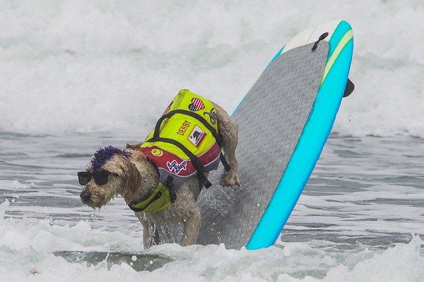 Dog surfing championships 2018