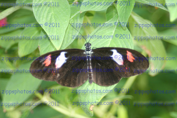 Butterfly Palace 10-28-2005