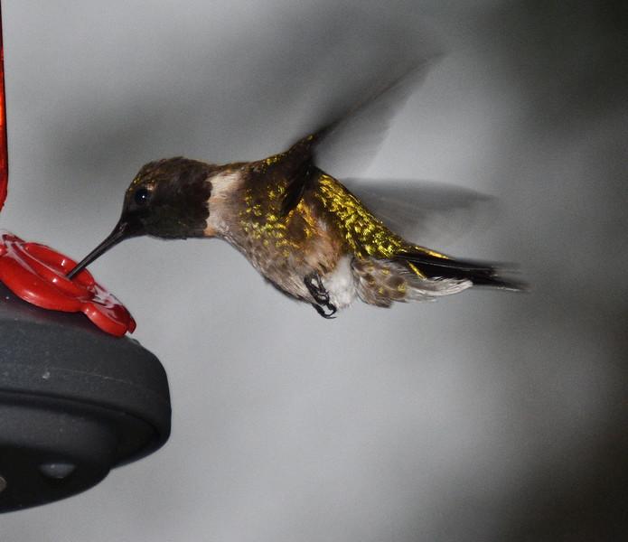 HUMMING BIRD YELLOW.jpg