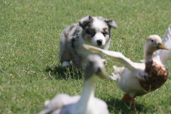 Donna Baumann's puppies