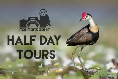 Half Day Birding and Wildlife Tours
