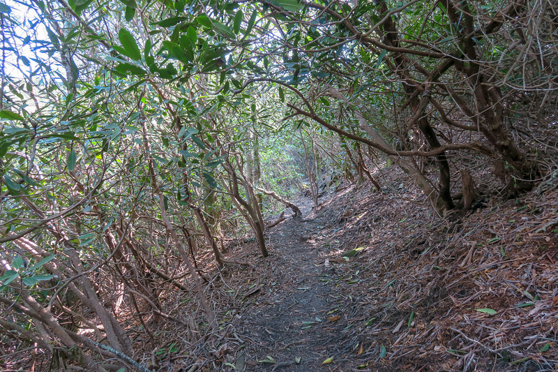 Mountains-to-Sea Trail -- 5,260'