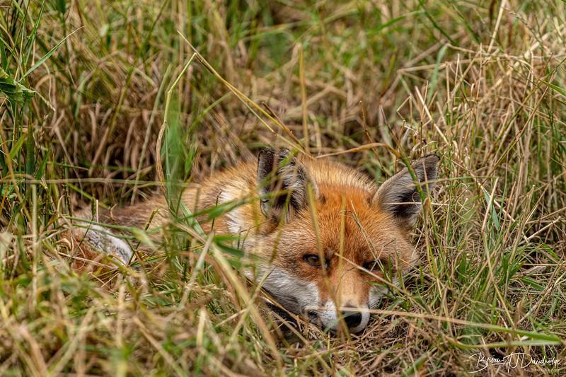 British Wildlife Centre_D850-9995.jpg
