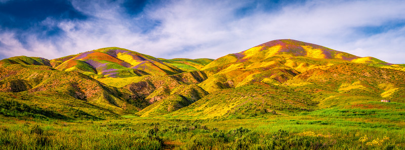 Carrizo Plain National Monument Wildflowers Superbloom Spring Symphony #1!  Elliot McGucken Fine Art Landscape Nature Photography Prints & Luxury Wall Art