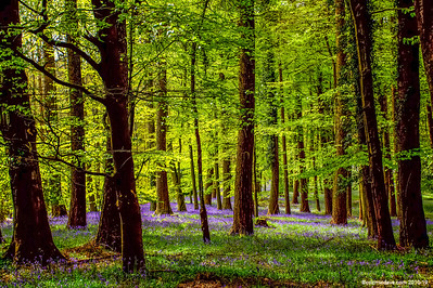 Greeting Cards - Scenes Of The Forest Of Dean