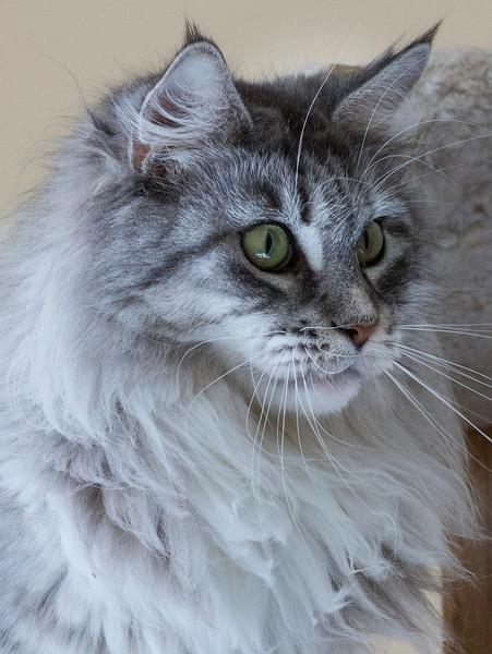 Kittens238.jpg
