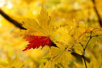 Fall Colors at the Lake
