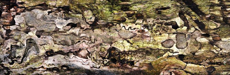 1683-1688 LHB Bark Beetle Burrows ss MALA 3kpx PS-.jpg