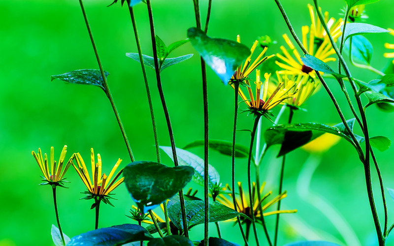 20170908 Flowers HDR-edit.jpg