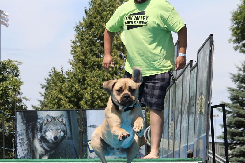 2015.8.6 Winnebago County Fair Dock Dogs (23).JPG