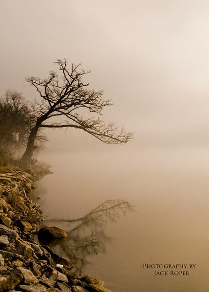 Tree in the fog   - Copy.jpg