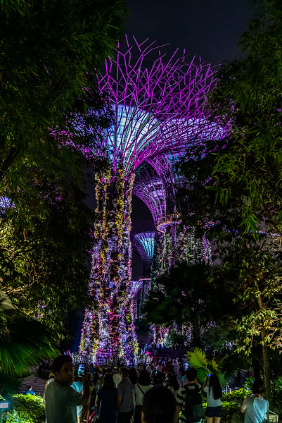 Singapore-evening-1571.jpg
