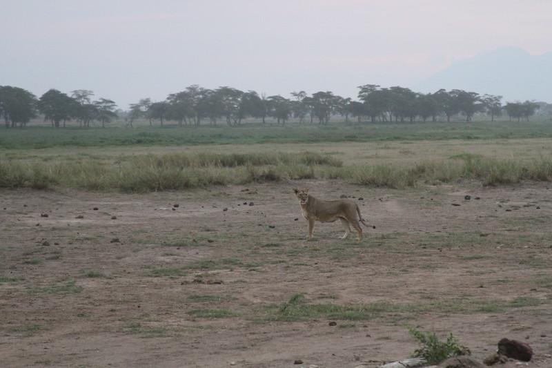 Kenya 2019 #2 1685.JPG