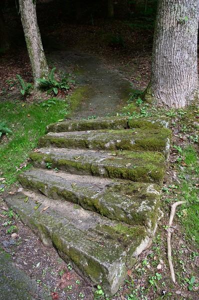 moss steps.jpg
