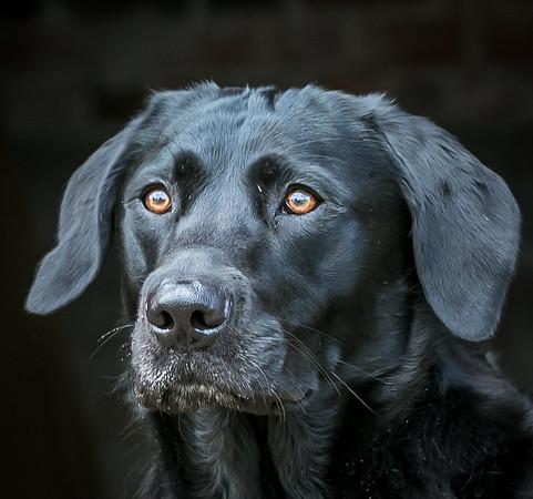Dog portfolio shots