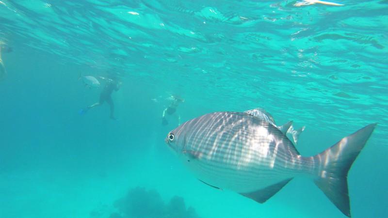 Cozumel Snorkel.jpg
