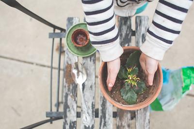 Olive Pots a Plant