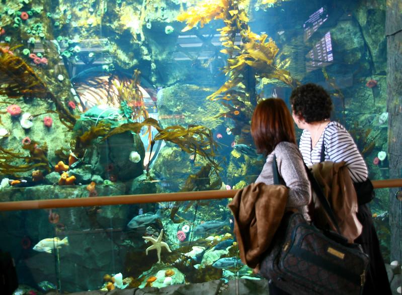 Enjoying the gorgeous new aquarium at Vancouver Airport