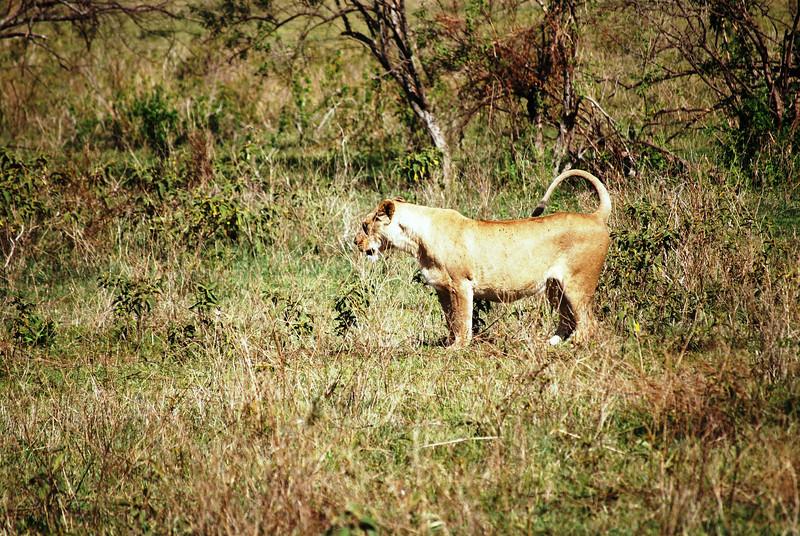 Ngorongoro (82).JPG