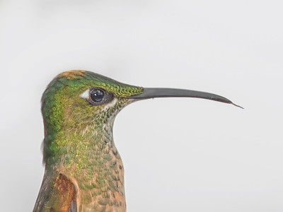 Hummingbirds and Tanagers
