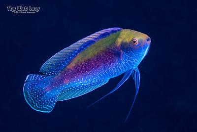 CIP Fish