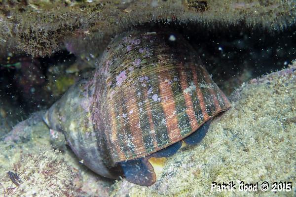 Various Gastropoda