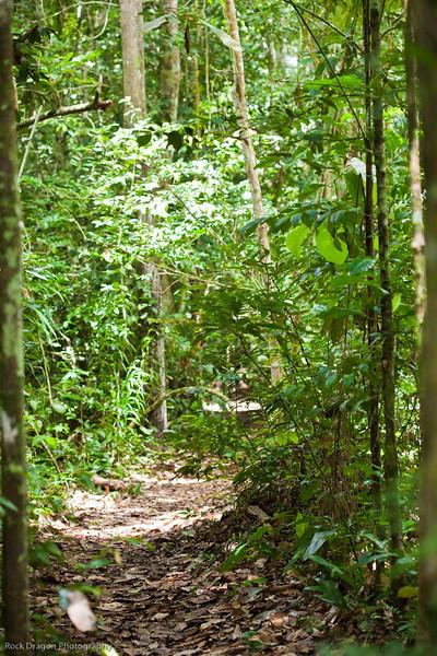 The Peruvian rain forest.
