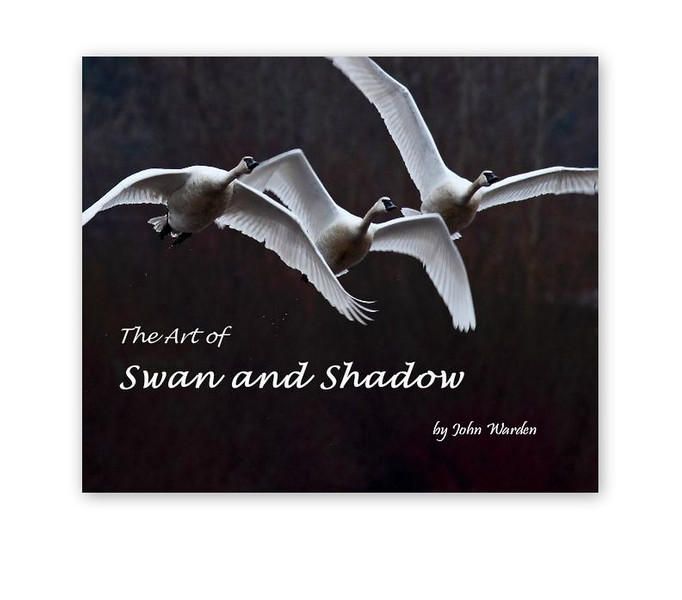 swan and shadow 2.jpg