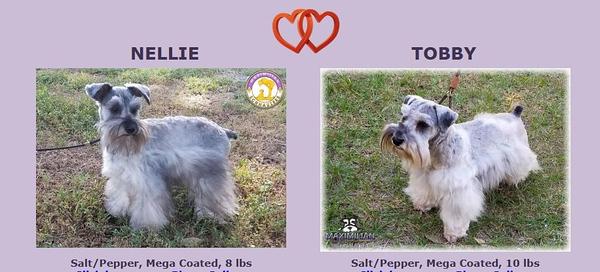 Nellie & Toby Puppies, DOB 04/01/2020