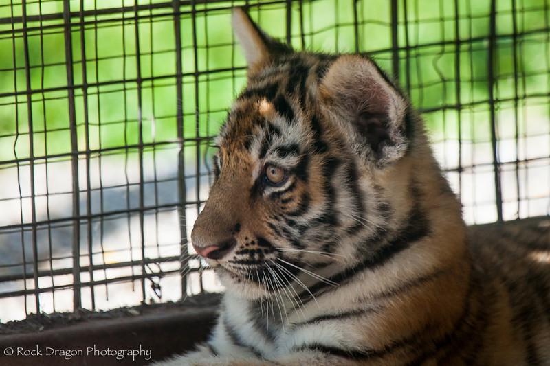 zoo_july_2012-23.jpg