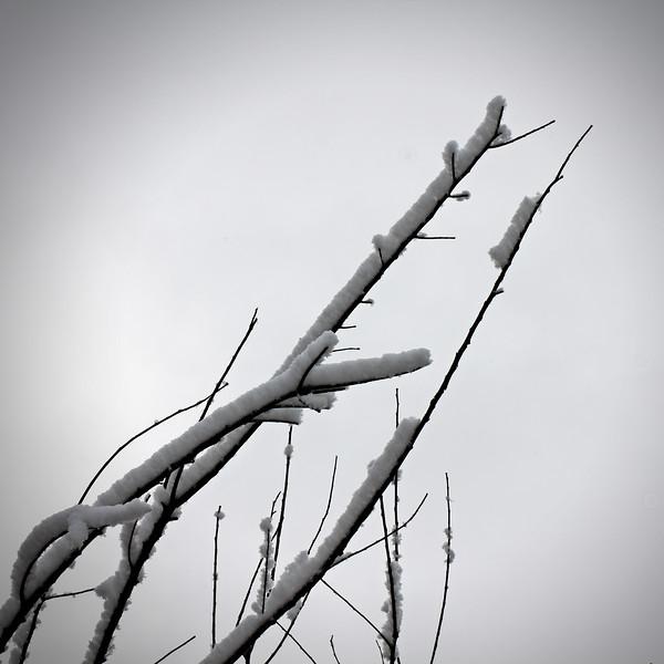 2013 2-28 Snow