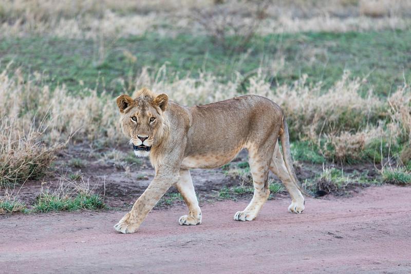 Africa - 101616 - 7680.jpg