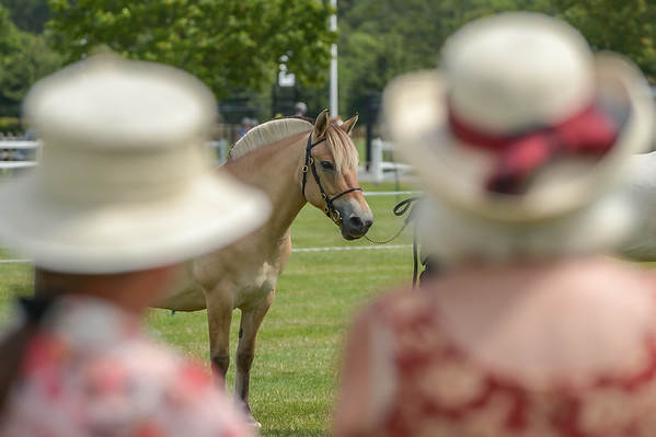 British Palomino Society National Championships 2014