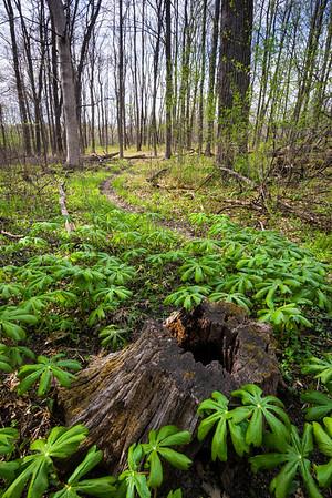 Wayne Grove Forest Preserve