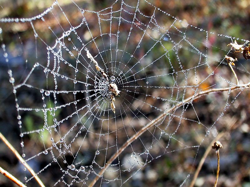 Spider Web. Missouri Ozarks.