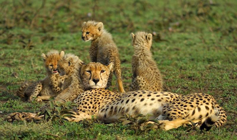 Serengeti family