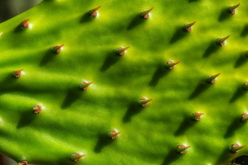 Cactus 2, Luther Burbank Home and Garden, Santa Rosa, California, 2010