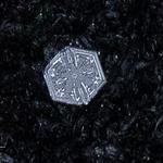 snowflakes-1629.jpg