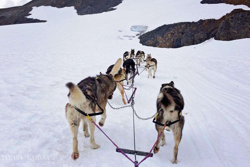 DogSledding2-11.jpg